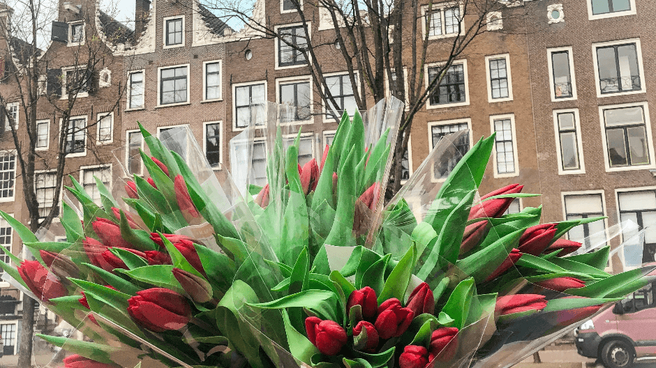 Amsterdam Tulips - canals.png