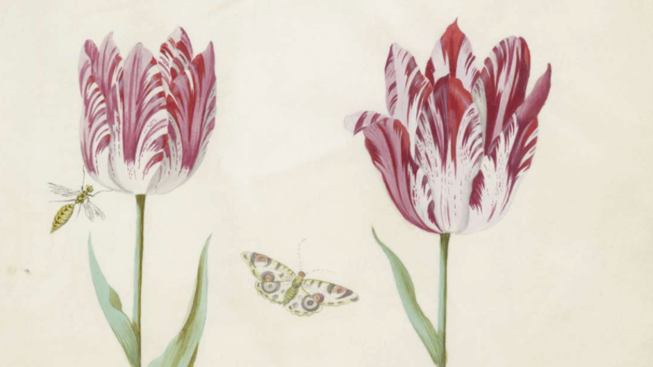 Amsterdam Tulips - print.png