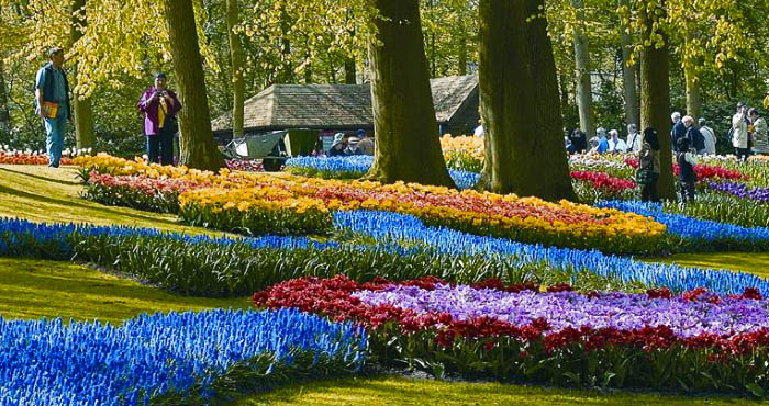 Keukenhof Flowerfield_many colors