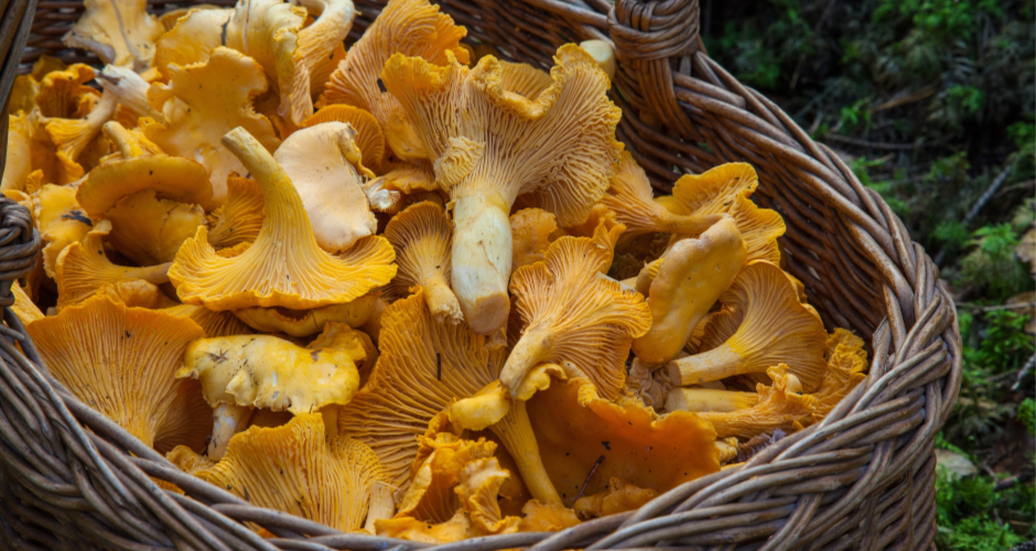 Fall in Stockholm – mushroom hunt & archipelago cruises